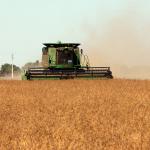 SGA8197-Harvesting